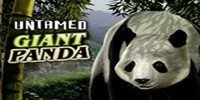Untamed Giant Panda Free Slot