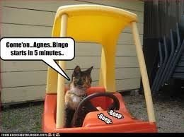 bingo-cat